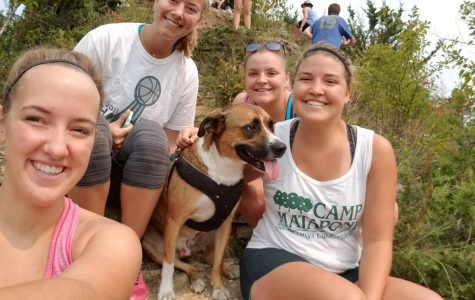 Viewpoint: Bring the Pets Home