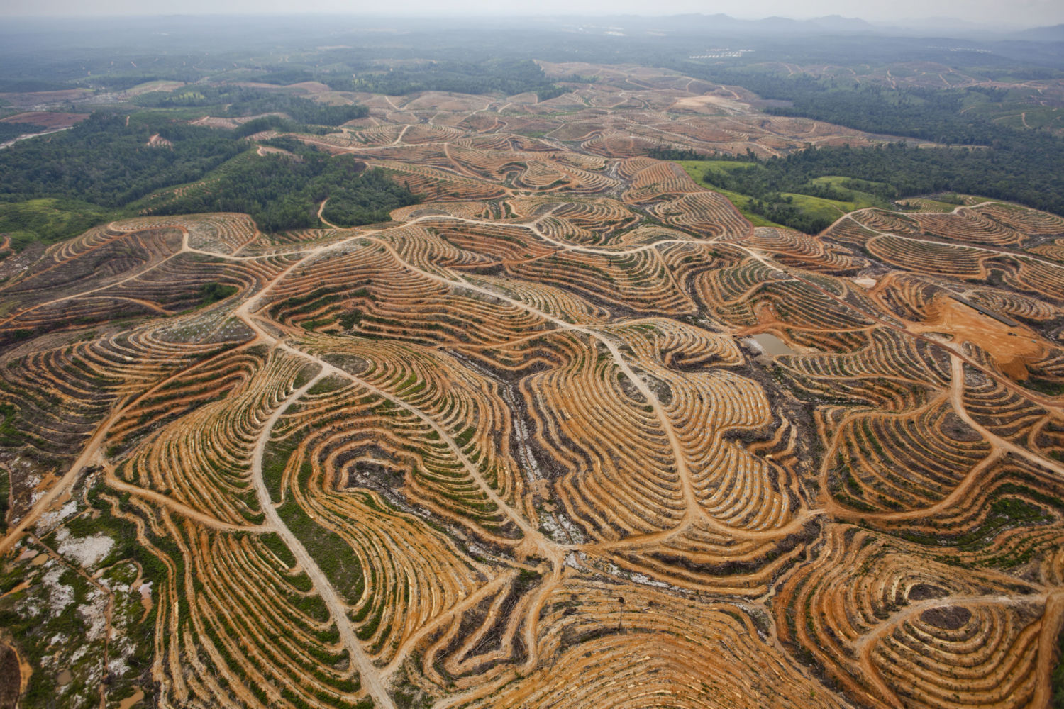 https://e360.yale.edu/features/tracking_commodities_to_save_world_forests_trase