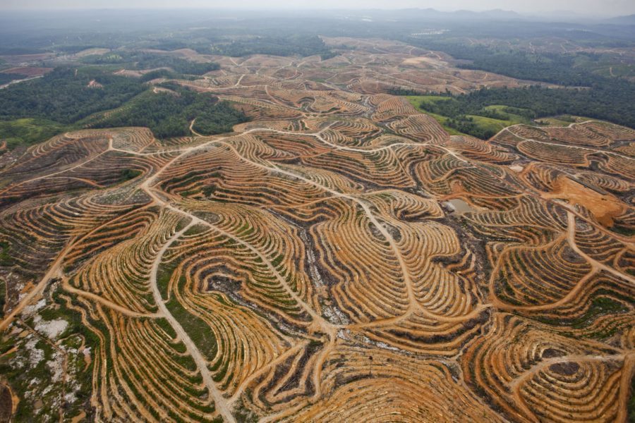 Opinion: Palm oil consumption in relation to deforestation – The Racquet Press