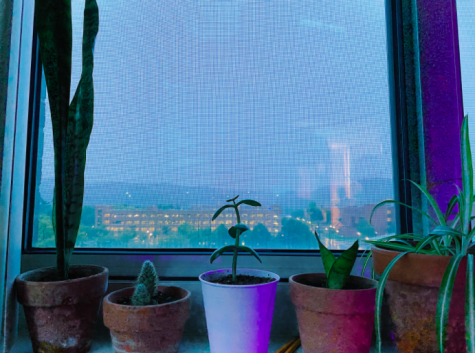 Plants sit on the window sill in Eagle Hall.