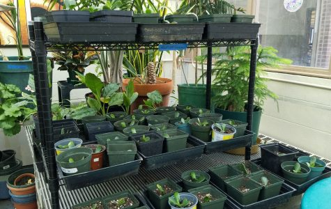 A photograph of plants on a shelf in the greenhouse.